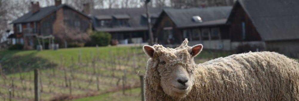 Benmarl Winery pic 3, Marlboro, NY