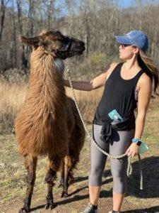 Alpaca/llama hike